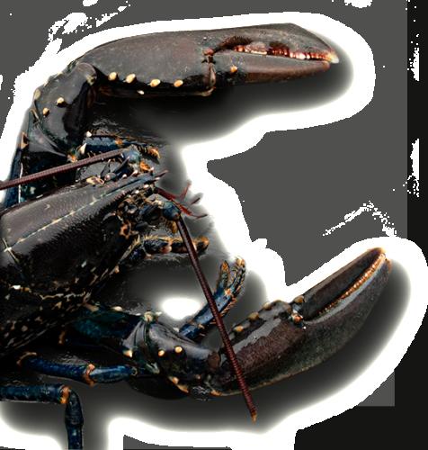 LaCagouille-img-accueil-homard